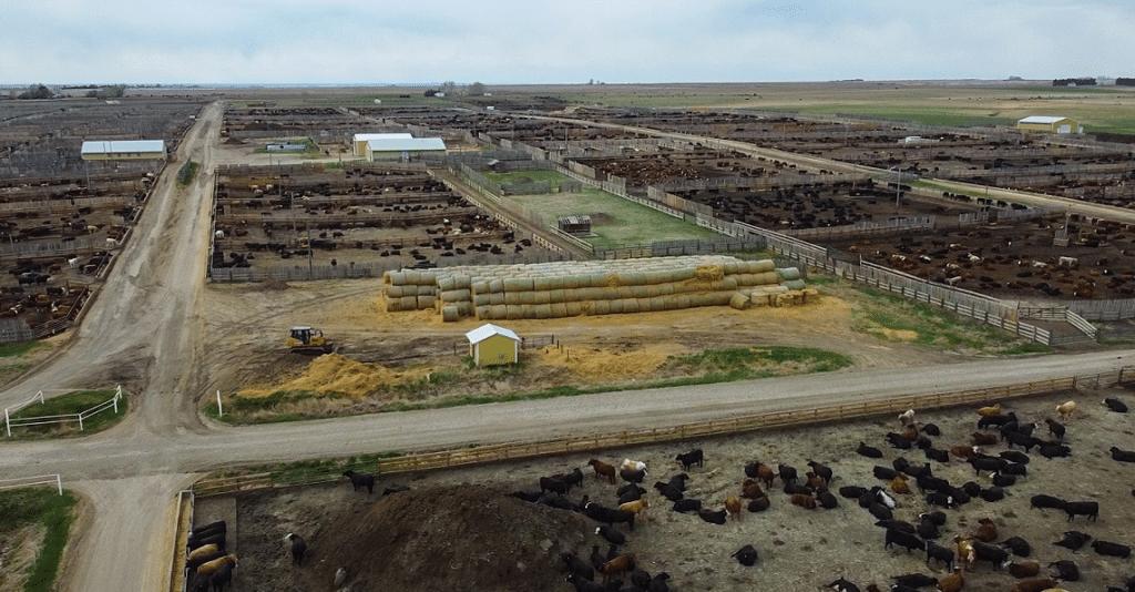 earthrenew targets organic fertilizer market