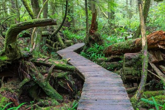 Natural Gas Pipelines to go through B.C. Rainforest