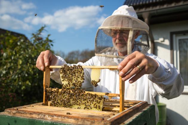 bee vectoring technologies