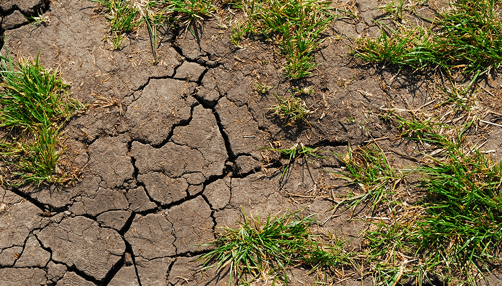 Soil erosion and dying grass
