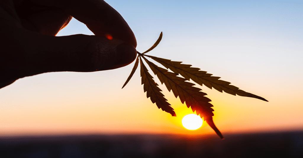 cannabis small-caps burn