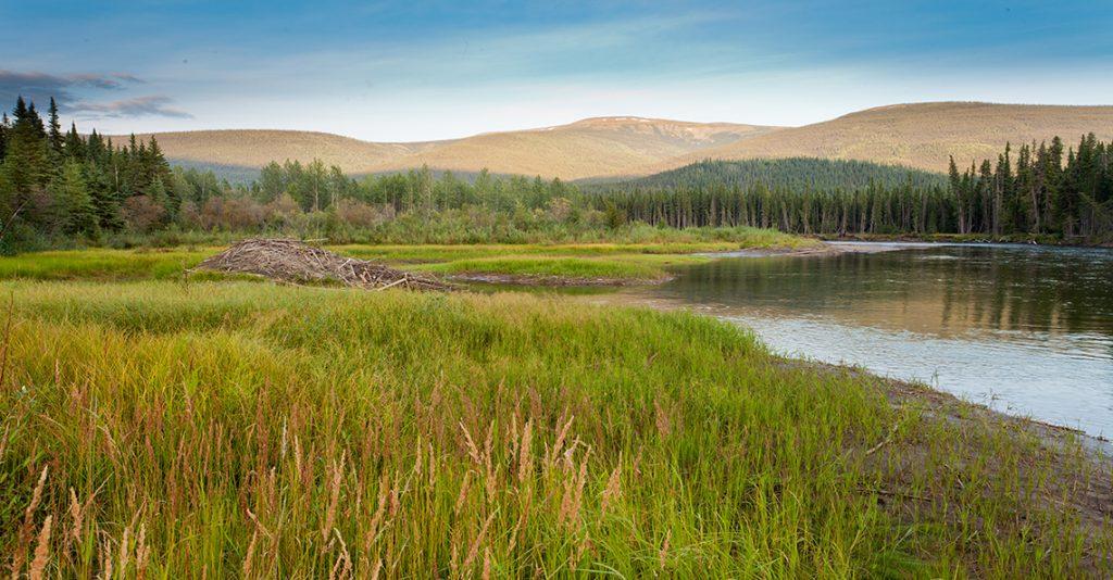 yukon territory wetlands